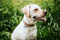 7 dog breeds immensely popular world wide