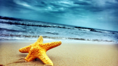 Star fish on the tropical beach