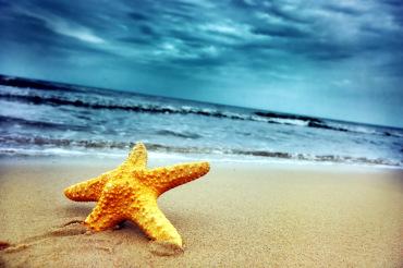 Star fish on the tropical beach