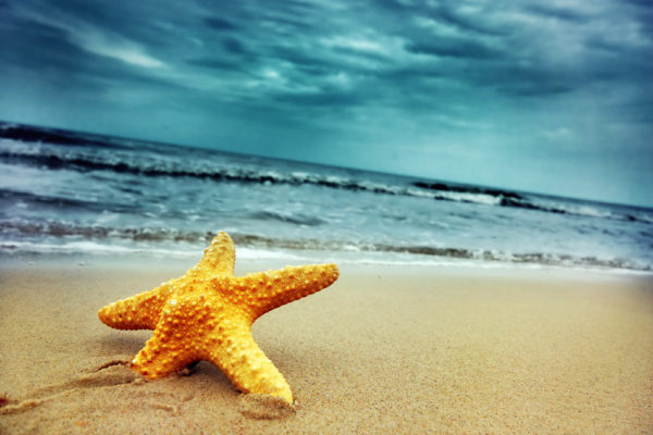 Starfish capture on a cloudy beach